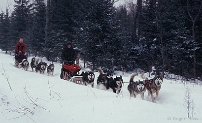 Dog-sledding, Quebec, Canada