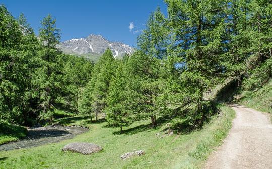 Return walk, showing track, river and conifer forests.